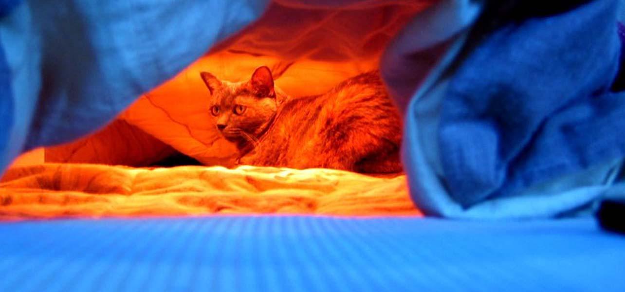 Cats can't resist the Kotatsu