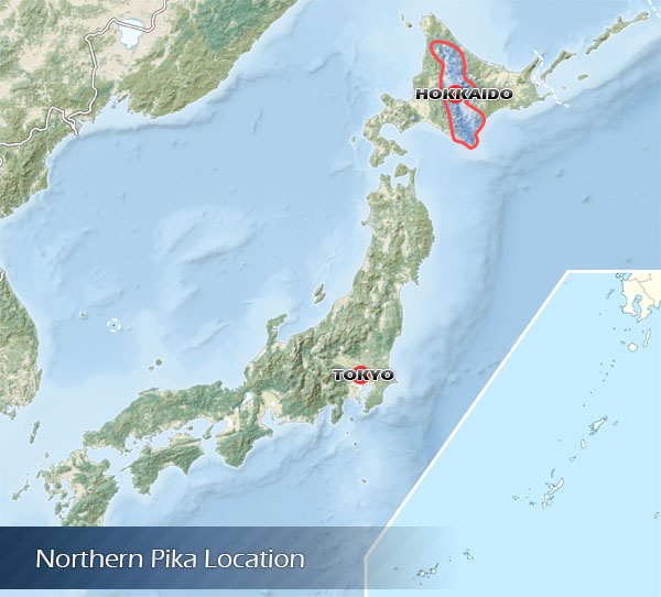 Location of the Northern Pika