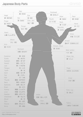 Japanese Human Anatomy Body Parts Japan Educational Material